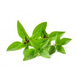 Basilic doux - Horapa leaf 100g